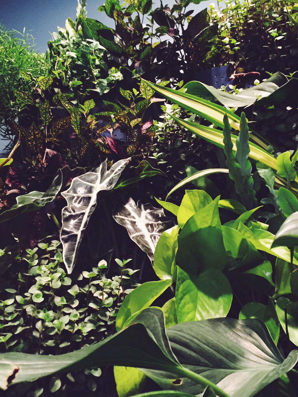 plant_wall_closeup