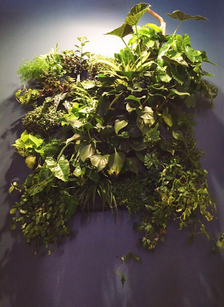 web_plant_wall copy