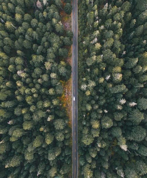 drone_forest